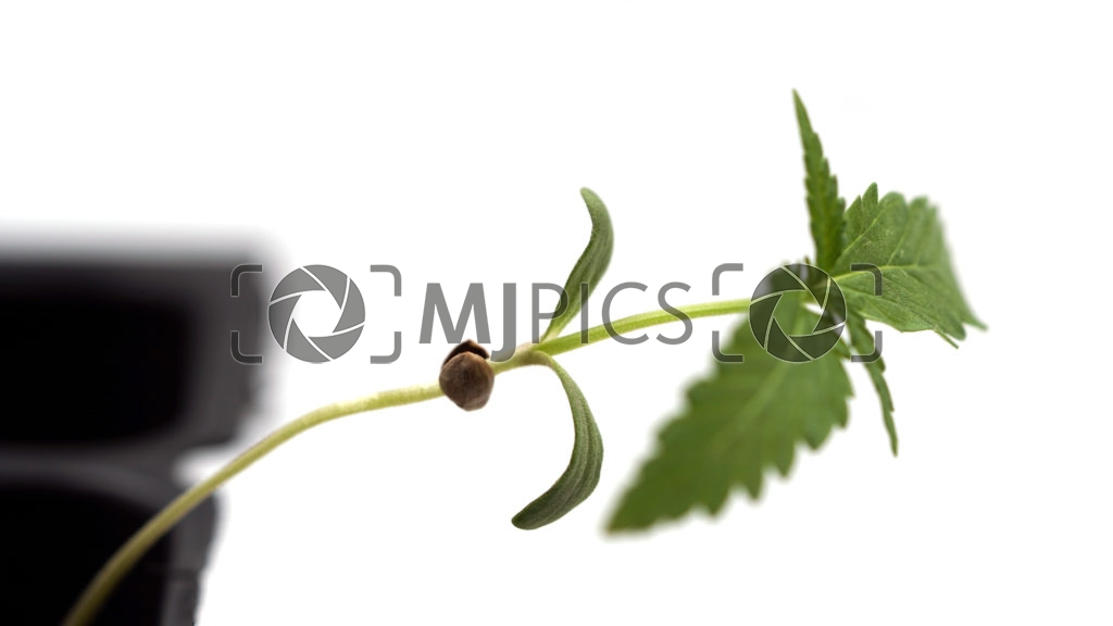 Plant 10000090 download