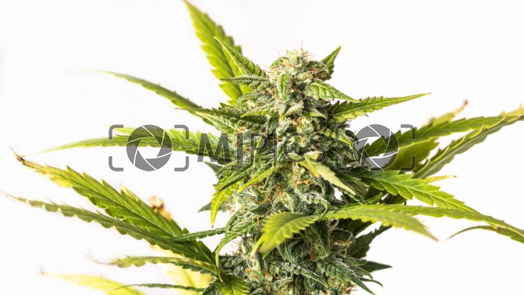 Plant 10000097 download