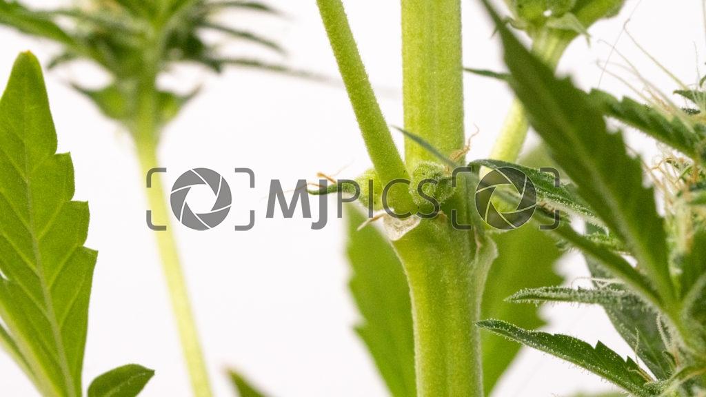 Plant 10000099 download