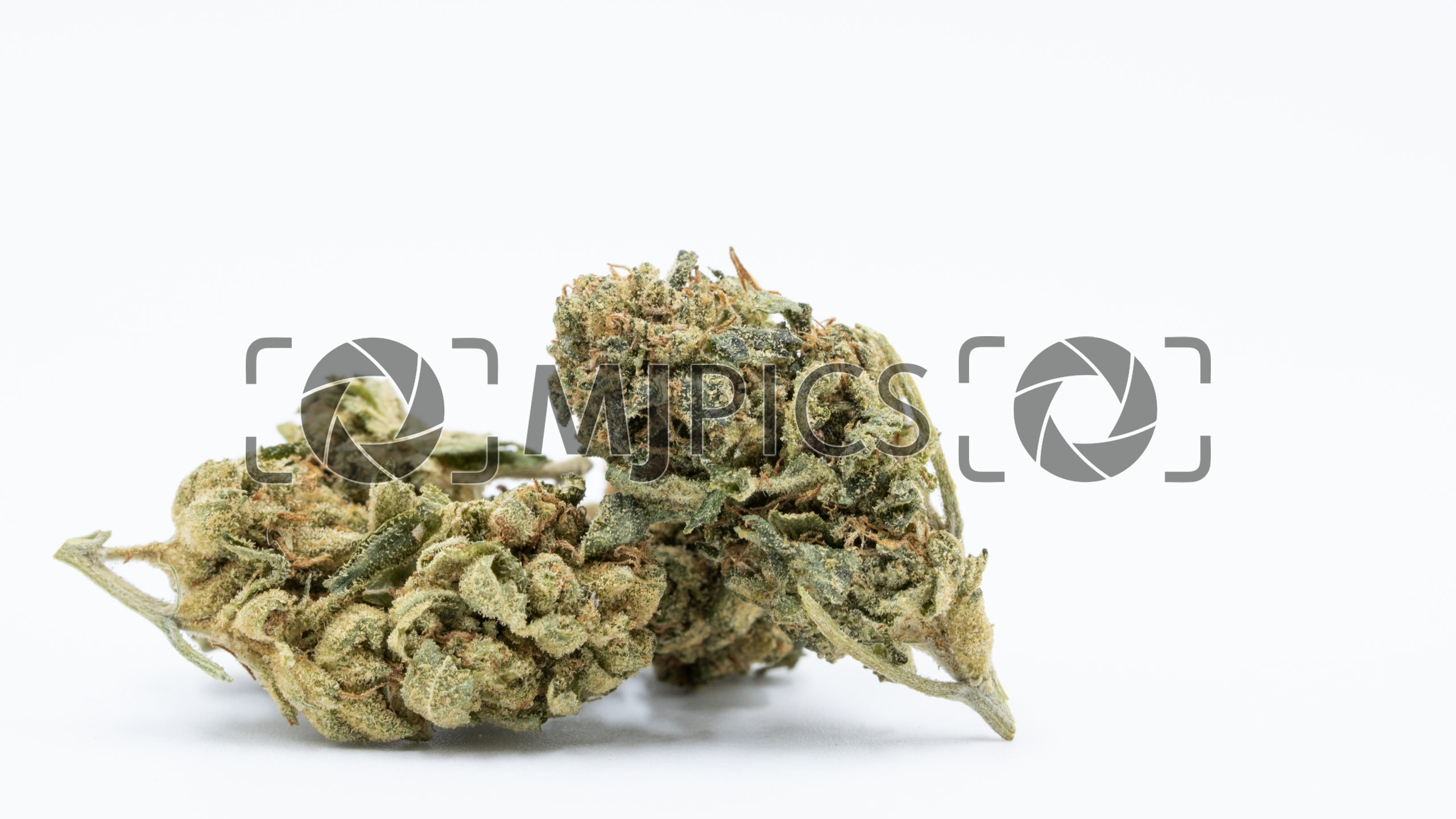 Amnesia Blue Headbrand 10000165 download