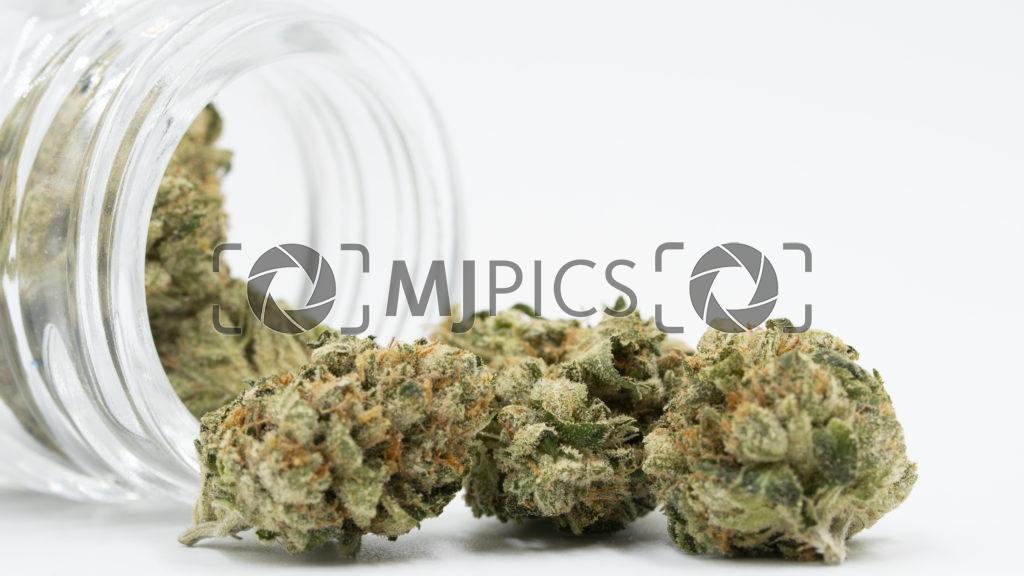 Green Crack 10000251 download
