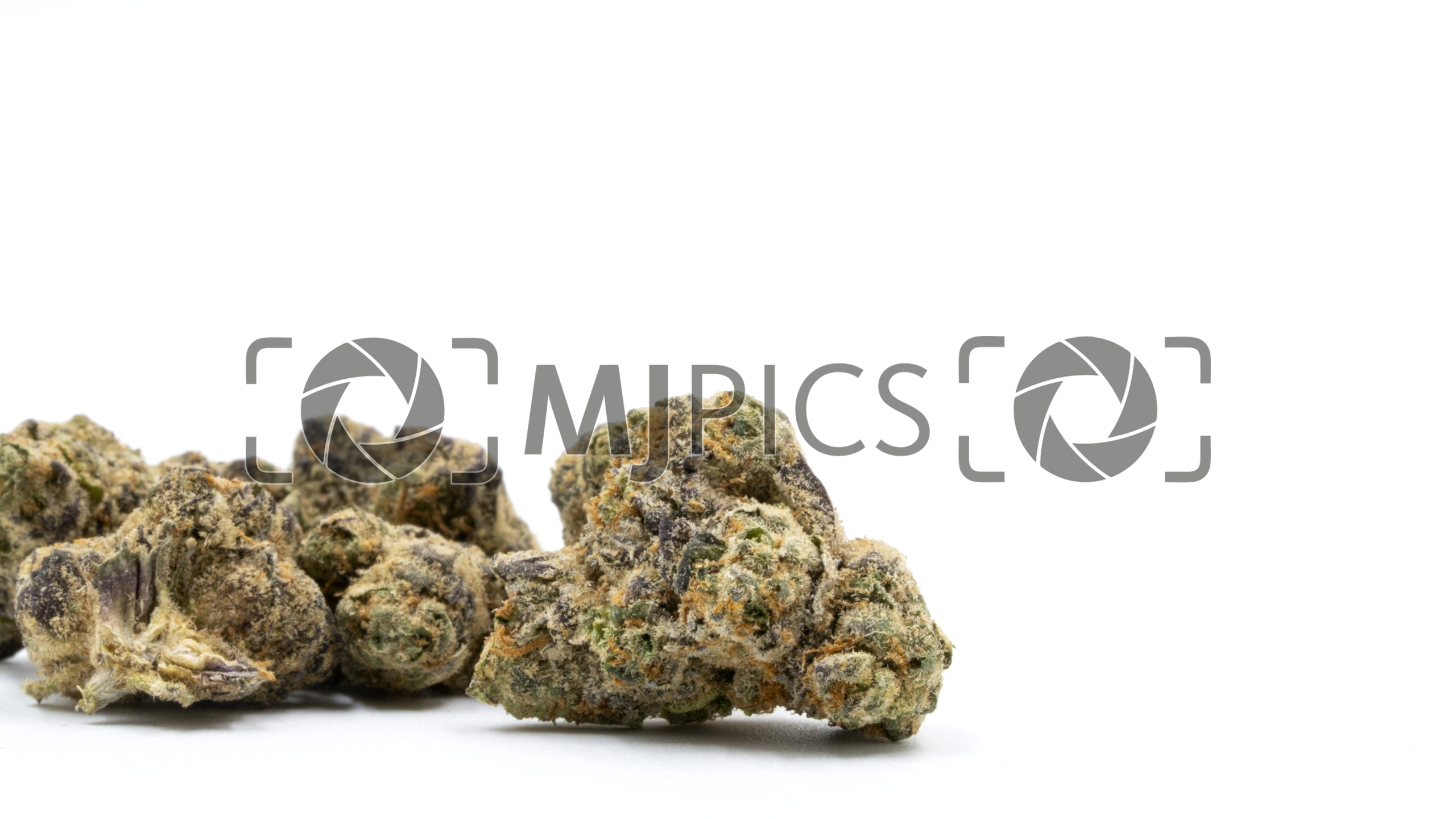 Blue Fruit Autoflower 10000373 download