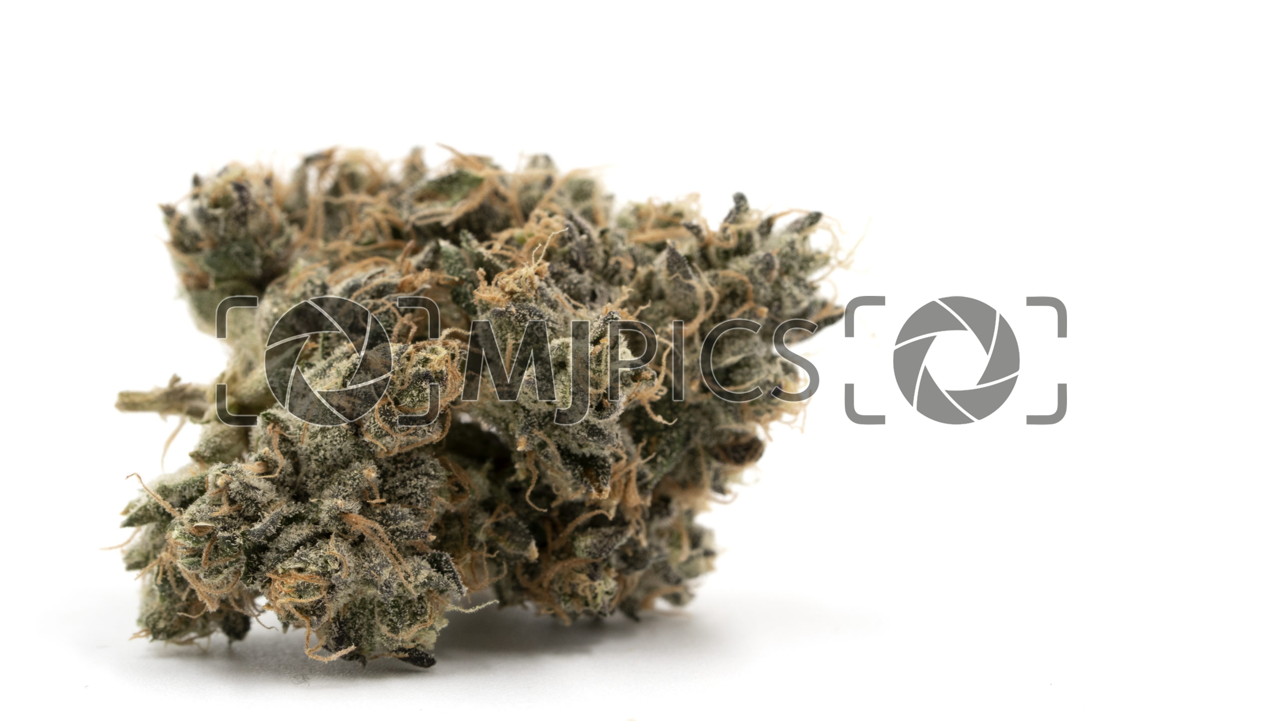 Blueberry X Big Bud Autoflower 10000409 download