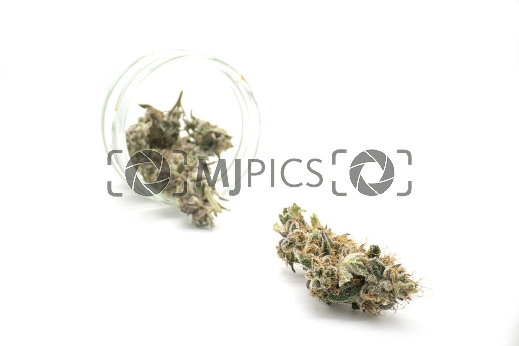 Grape Ape 10001166