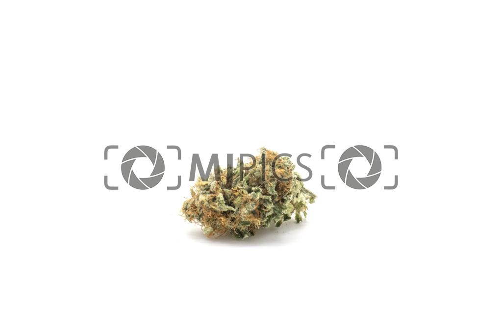 Orange Bud 10001191