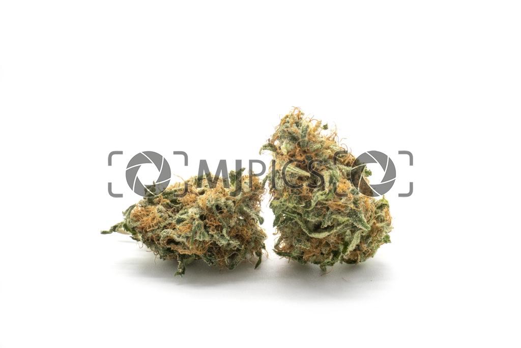 Orange Bud 10001193