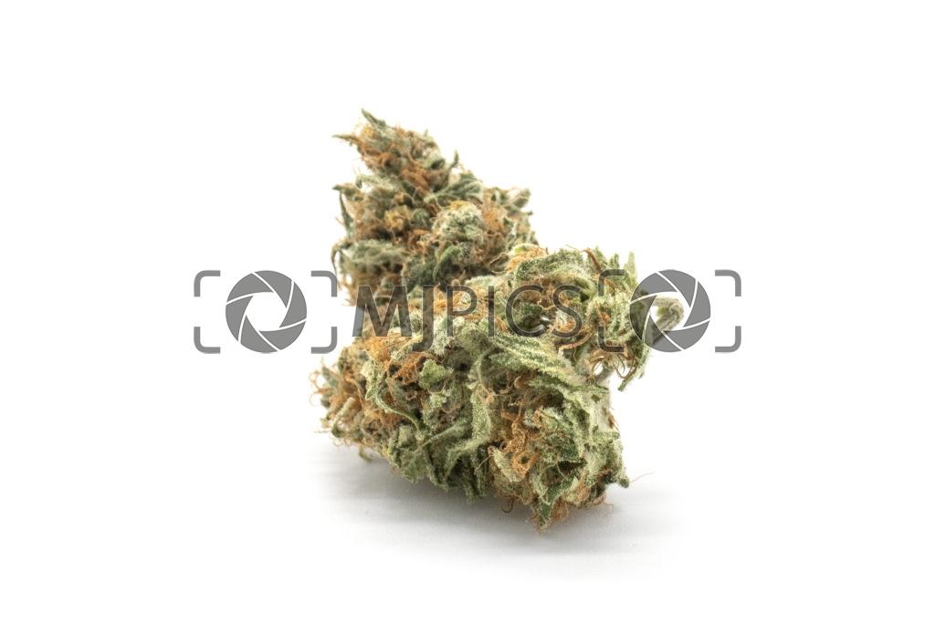 Orange Bud 10001195