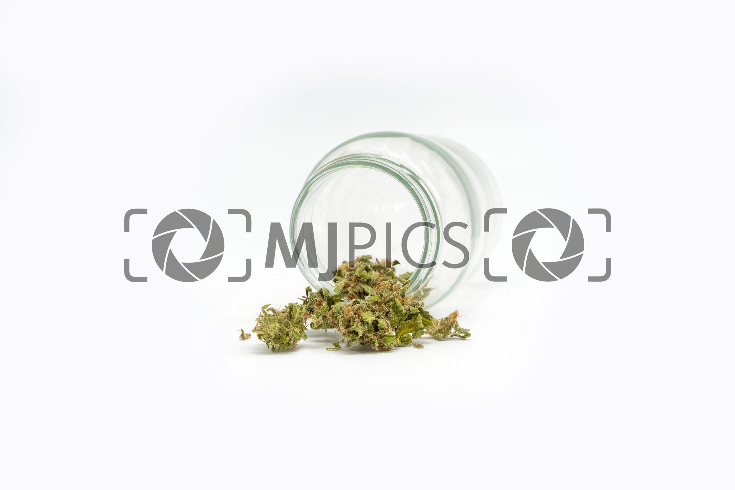 Green Crack 10001399